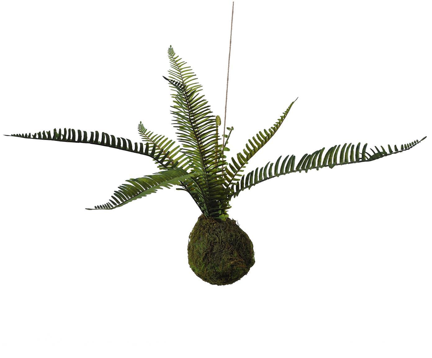 Sztuczny kwiat paproci Farn, Tworzywo sztuczne, pianka, poliester, trawa wodna, sizal, metal, Zielony, brązowy, W 55 cm
