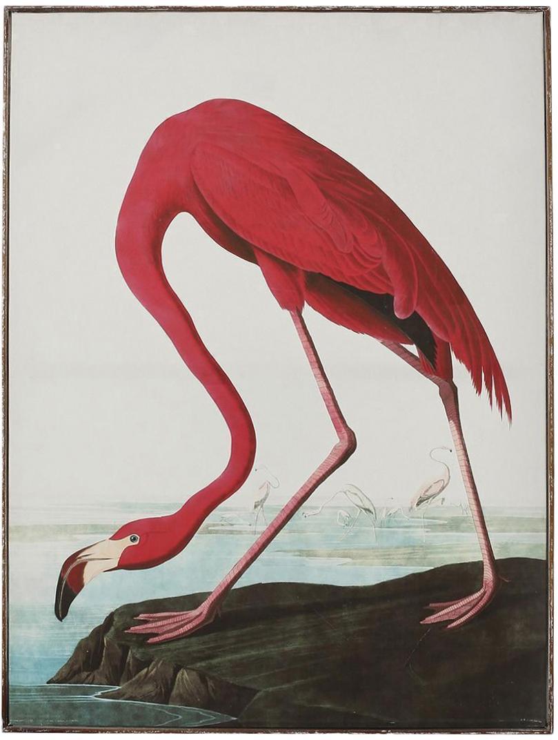 Lienzo enmarcado Flamingo, Multicolor, An 83 x Al 114 cm