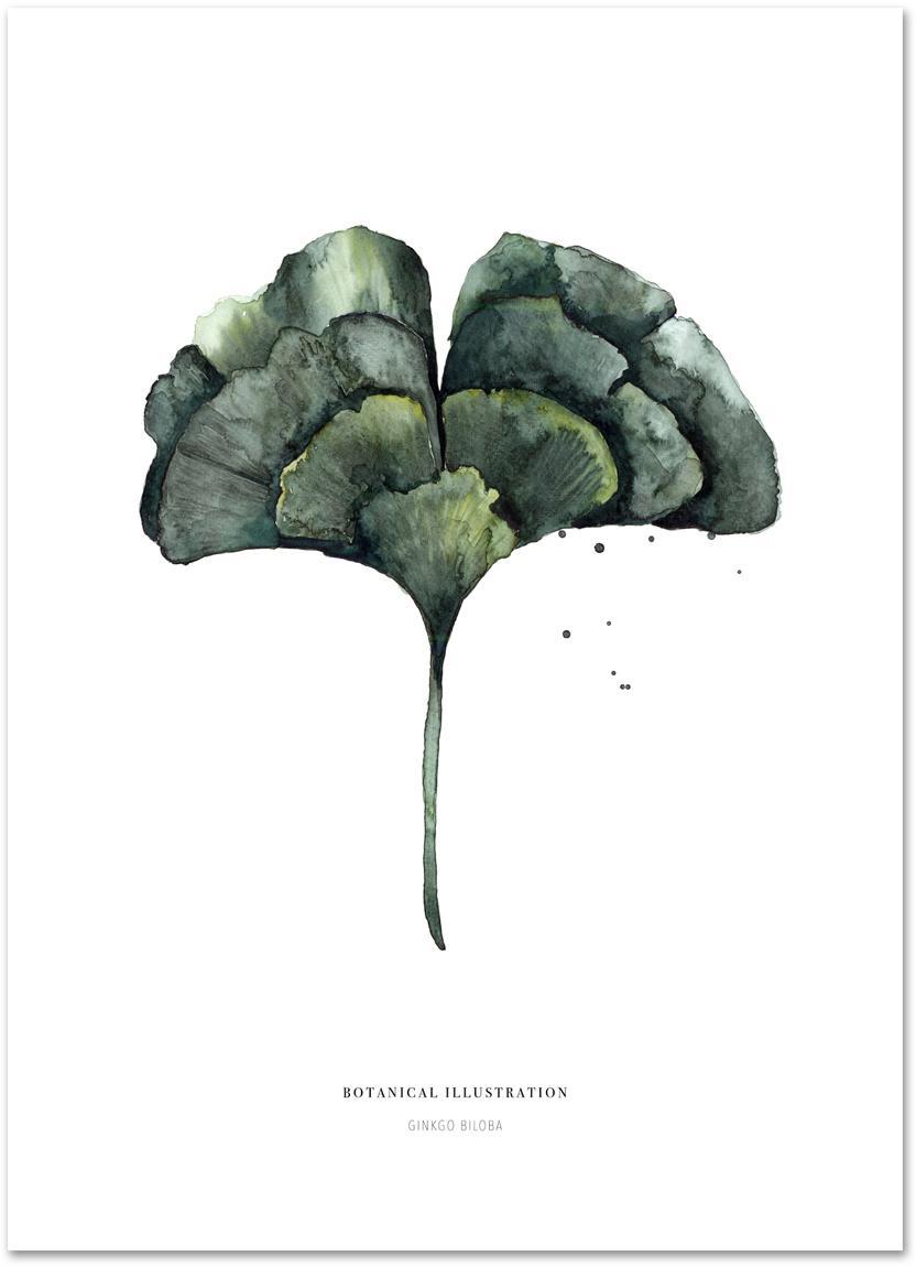 Poster Ginko, Digitaldruck auf Papier, 200 g/m², Weiss, Grün, 21 x 30 cm