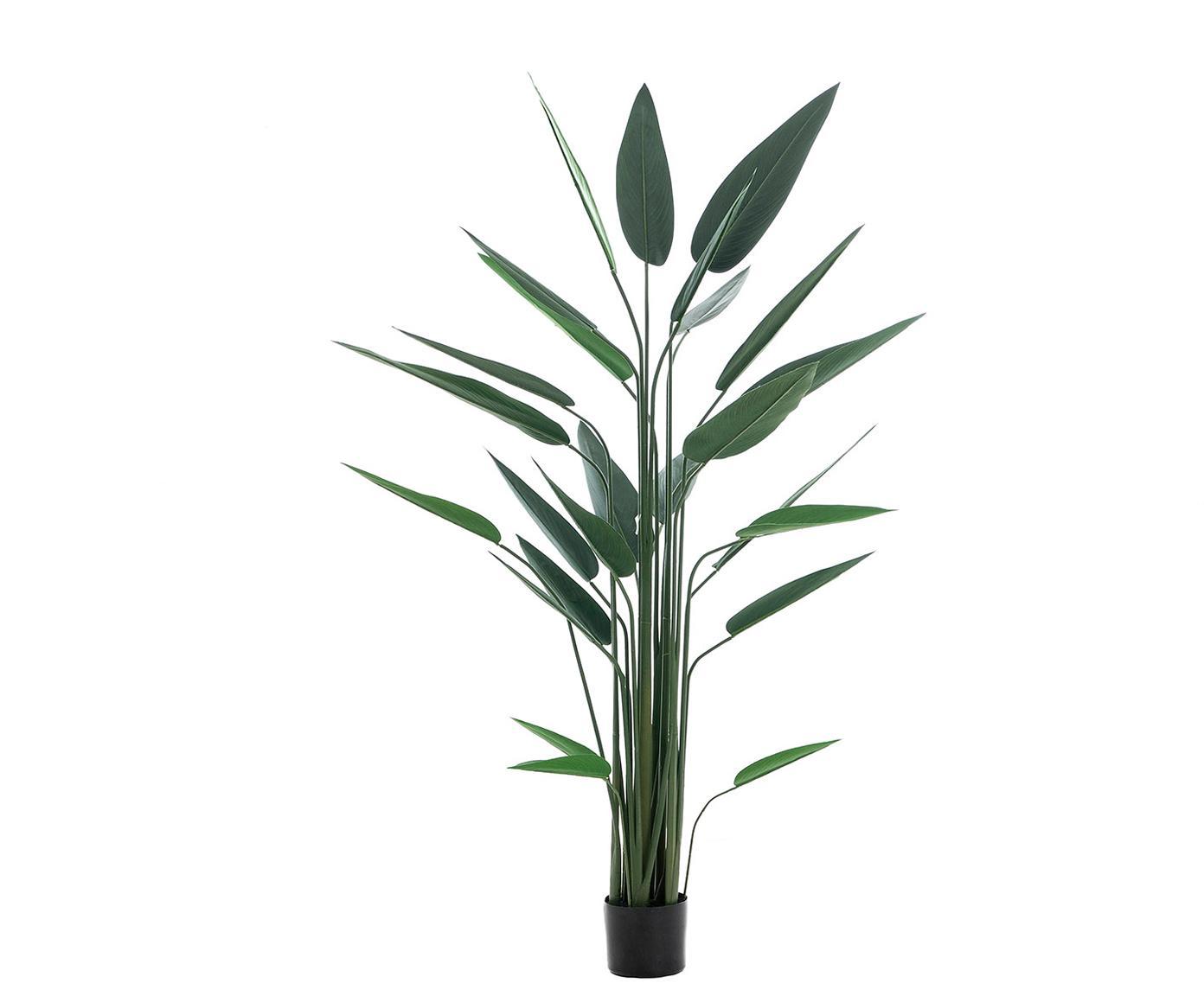 Planta artificial Burgela, Fibra sintética, Verde, negro, Ø 100 x Al 160 cm
