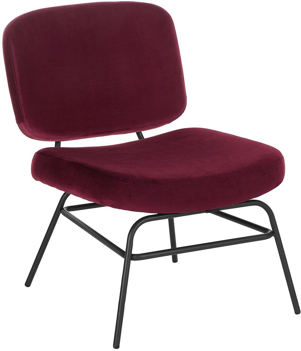 Fluwelen fauteuil Malte, Bekleding: fluweel (polyester), Poten: gepoedercoat metaal, Bekleding: donkerrood. Poten: mat zwart, B 58 x D 71 cm