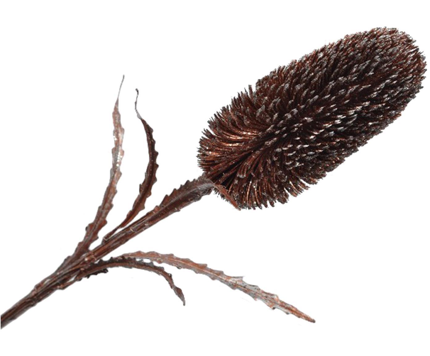 Fiore artificiale cespugli di zucchero Zena, Poliestere, polietilene, metallo, Marrone, argentato, Lung. 71 cm
