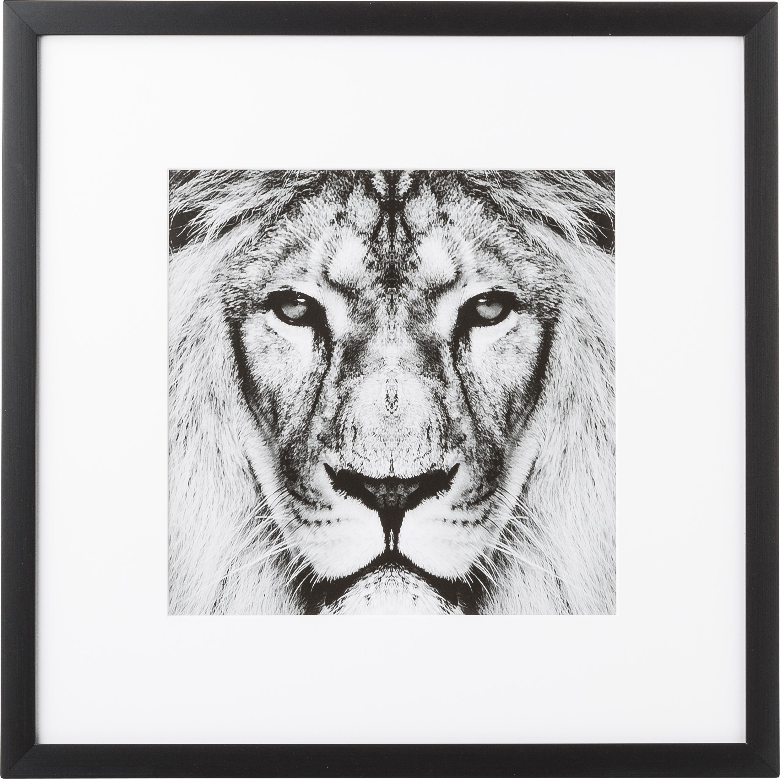 Gerahmter Digitaldruck Lion Close Up, Bild: Digitaldruck, Rahmen: Kunststoffrahmen mit Glas, Schwarz,Weiss, 40 x 40 cm