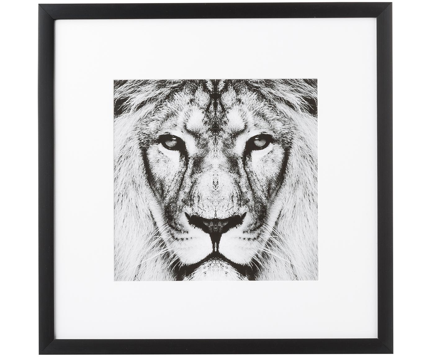 Impresión digital enmarcada Lion Close Up, Negro, blanco, An 40 x Al 40 cm