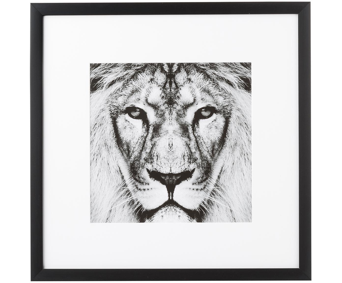 Ingelijste digitale print Lion Close Up, Afbeelding: digitale print, Lijst: kunststofframe met glas, Zwart, wit, 40 x 40 cm