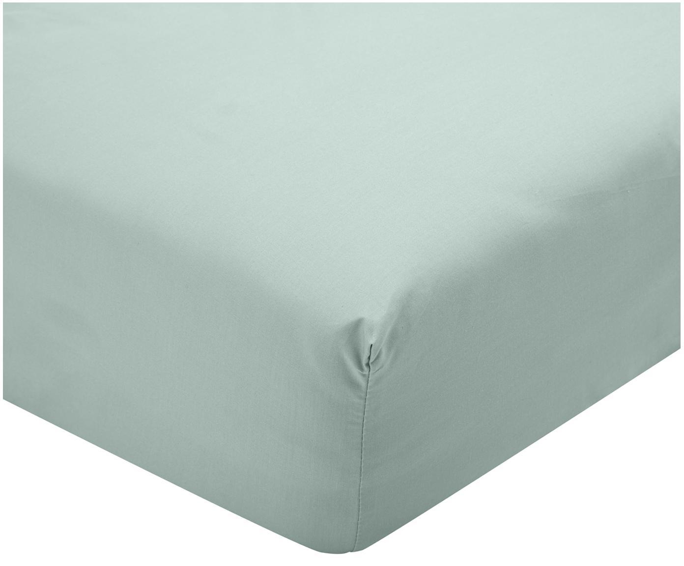 Lenzuolo con angoli in percalle Elsie, Tessuto: percalle, Verde salvia, 90 x 200 cm