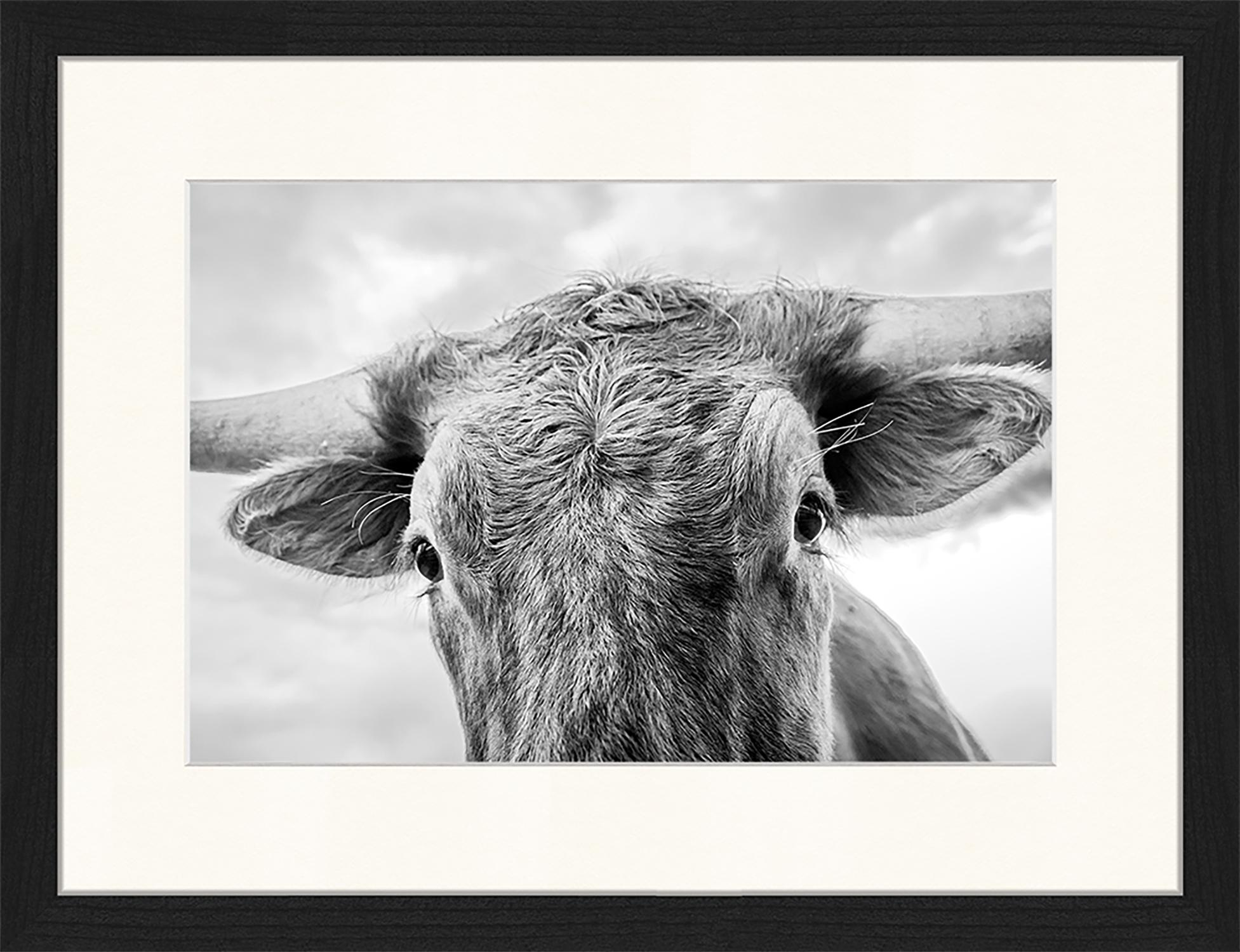 Stampa digitale incorniciata Texas Longhorn Steer In Rural Utah, Immagine: stampa digitale su carta,, Cornice: legno, verniciato, Nero, bianco, Larg. 43 x Alt. 33 cm