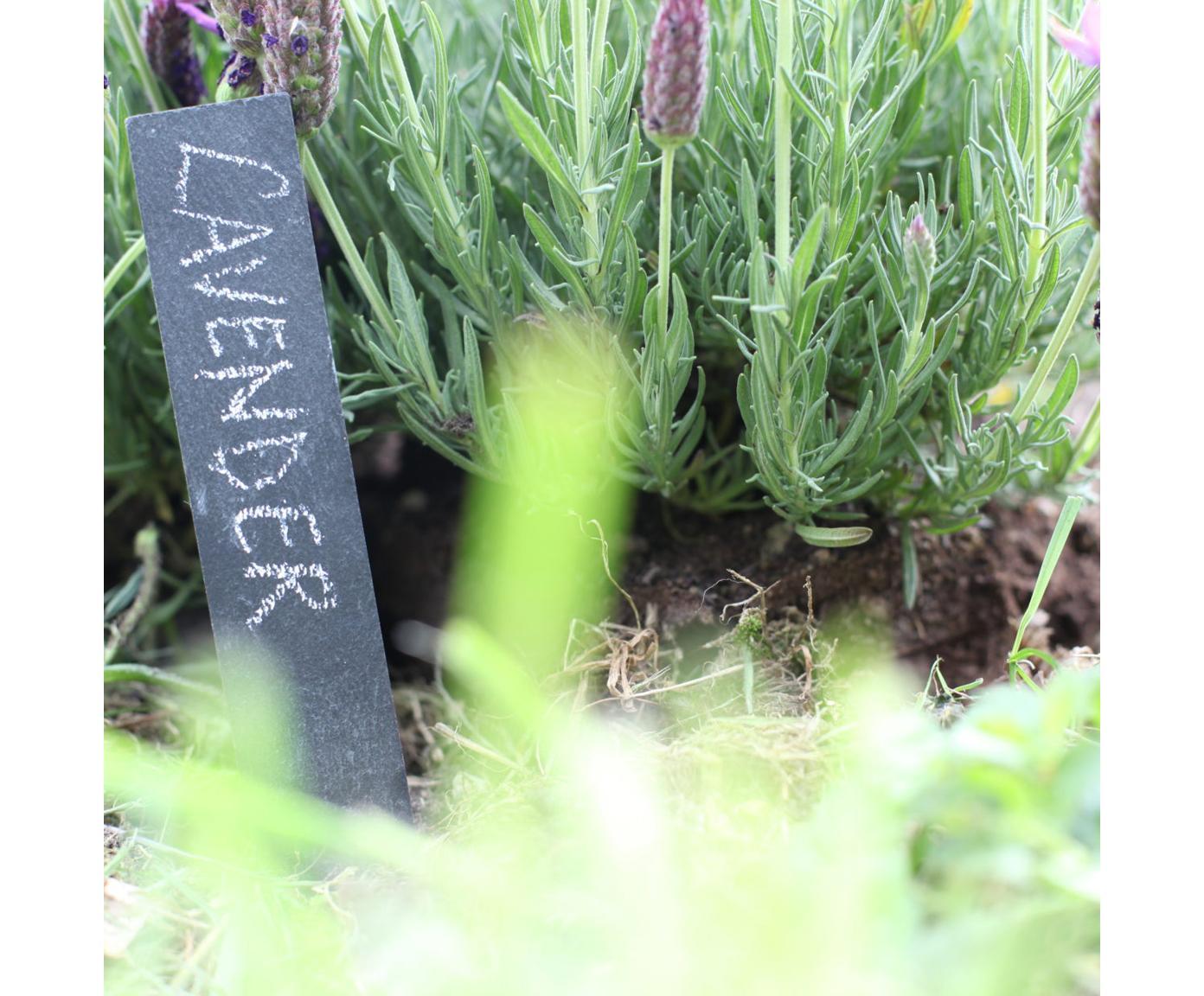 Komplet znaków na rosliny Ala, 7 elem., Kamionka, Antracytowy, S 4 x W 20 cm