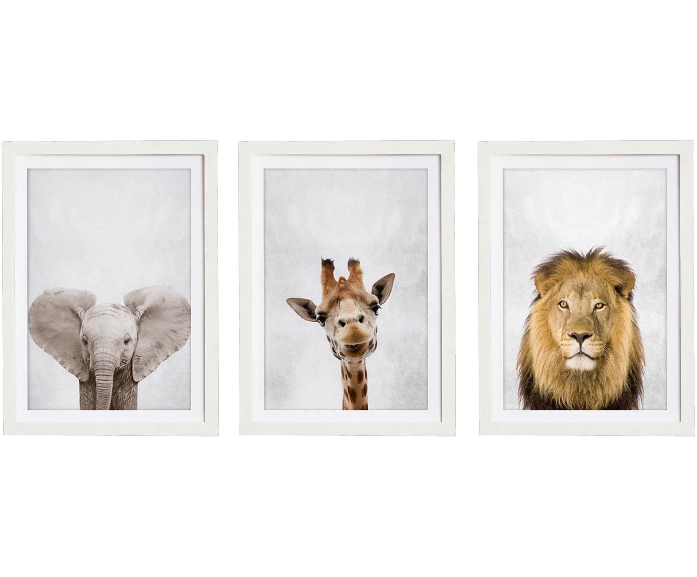 Gerahmtes Digitaldruck-Set Wild Animals, 3-tlg., Bild: Digitaldruck auf Papier, Rahmen: Holz, lackiert, Mehrfarbig, 30 x 40 cm