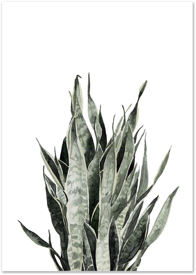 Poster Sanseviera, Digitaldruck auf Papier, 200 g/m², Weiss, Rosa, Grün, 21 x 30 cm