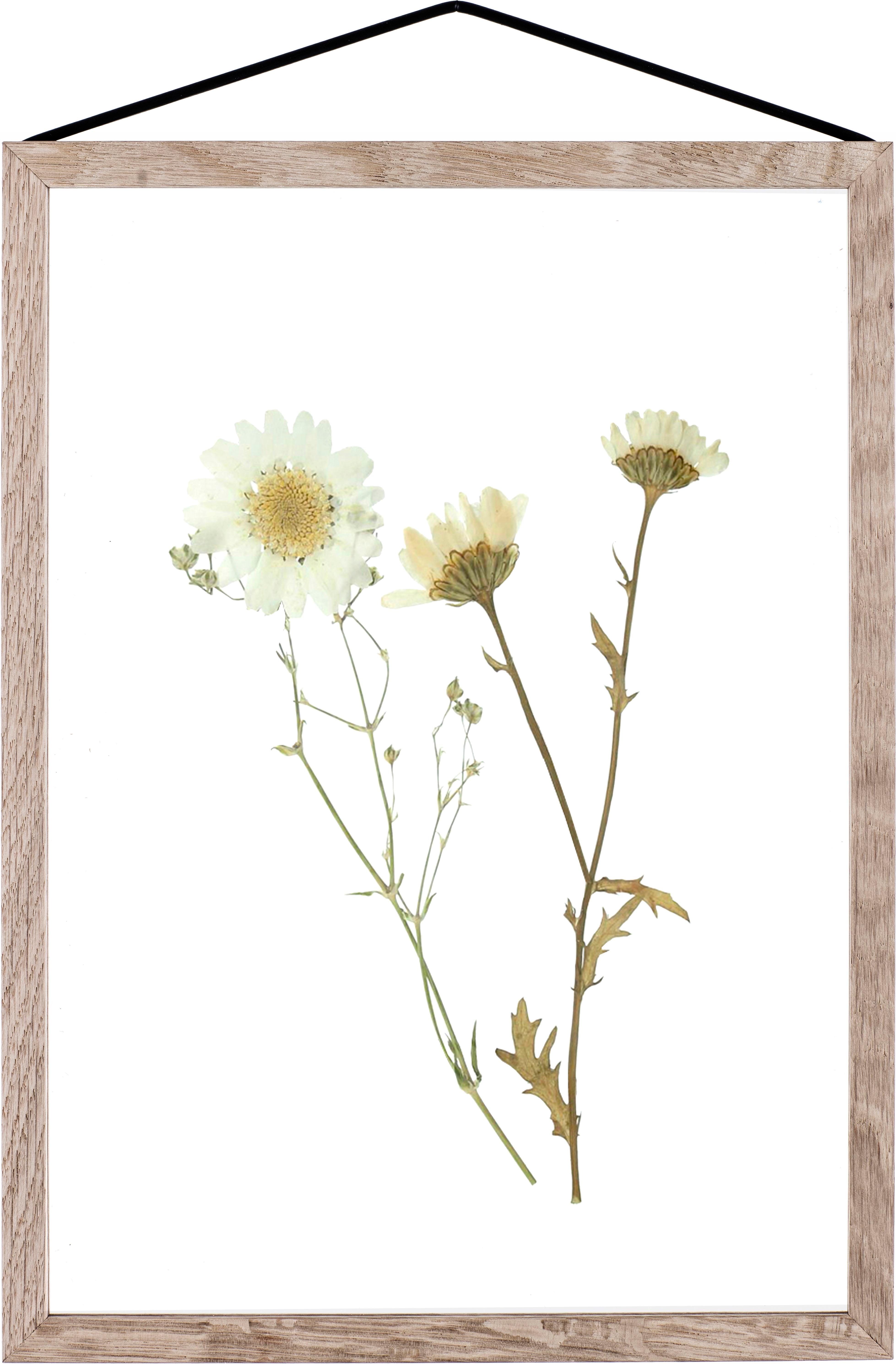 Marco Frame, Roble, negro, An 23 x Al 31 cm