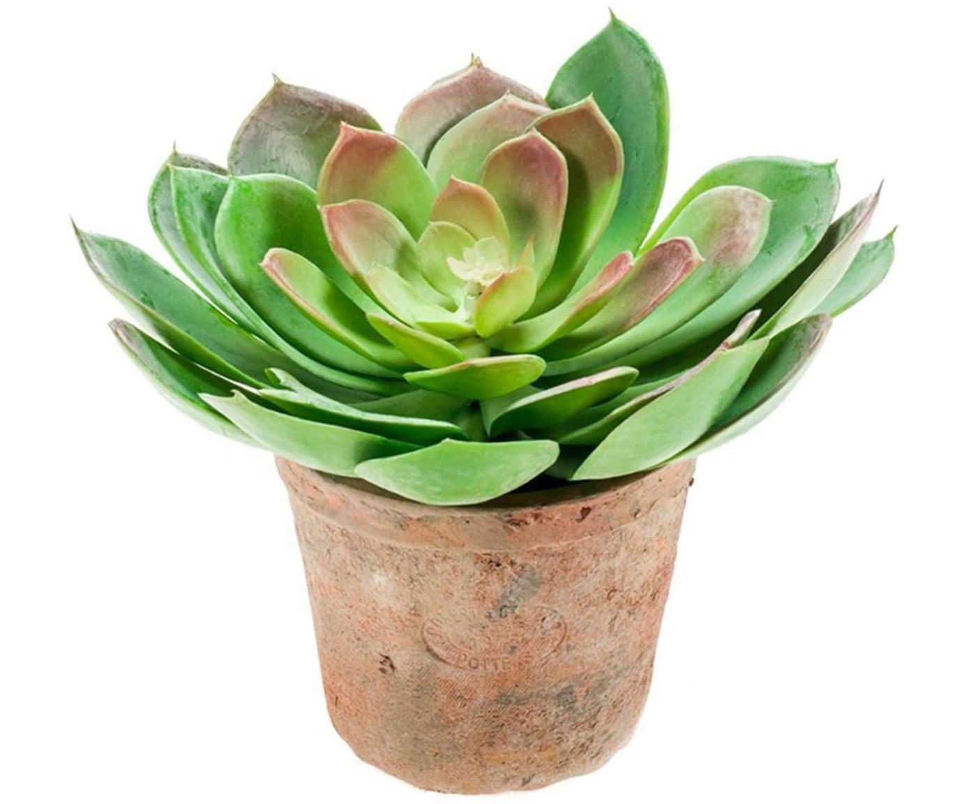 Planta artificial Cactus, Polietileno, Poliuretano, Verde, malva, Ø 15 x Al 20 cm