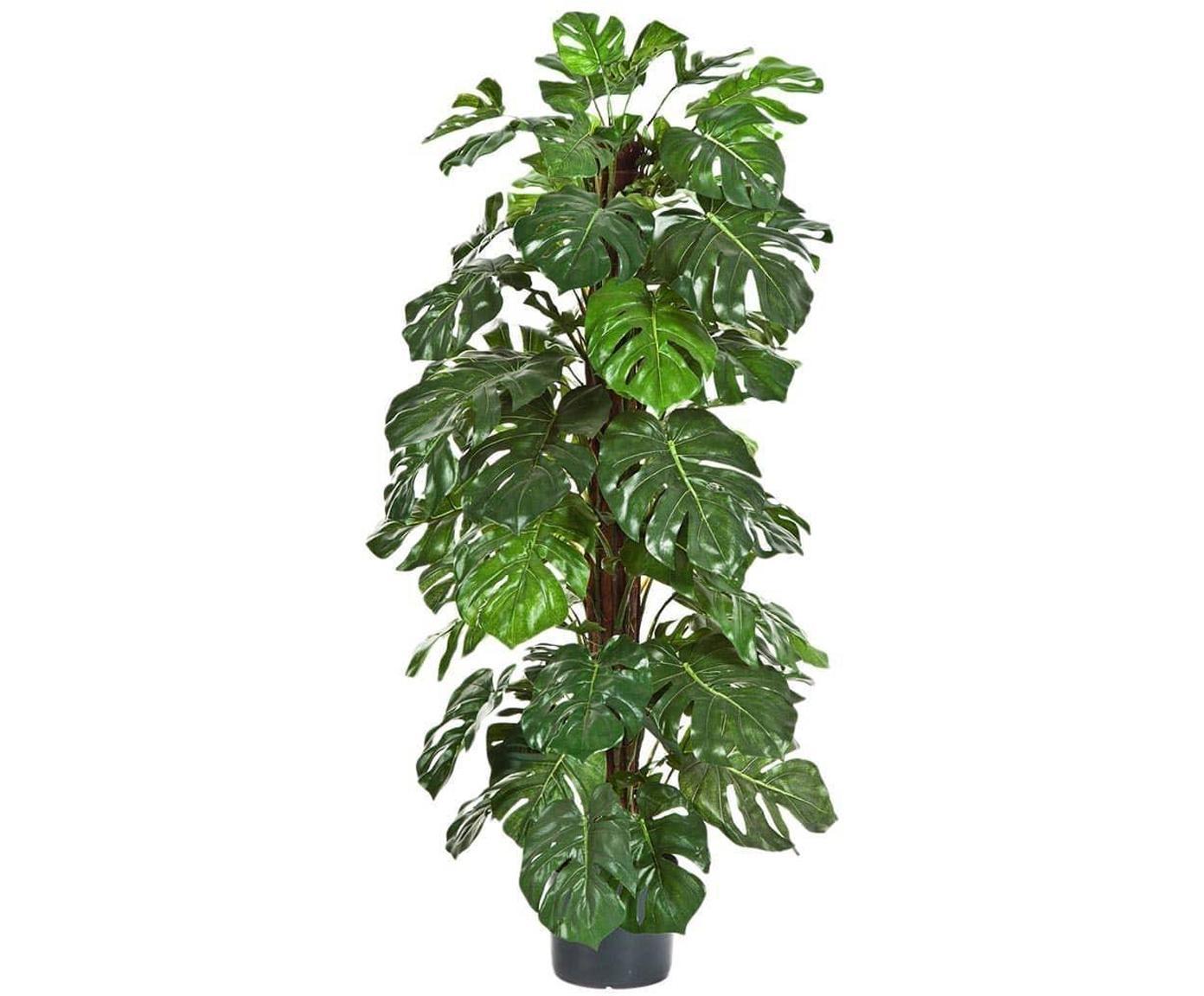 Planta artificial Philo, Fibra sintética, Verde, negro, Ø 40 x Al 120 cm