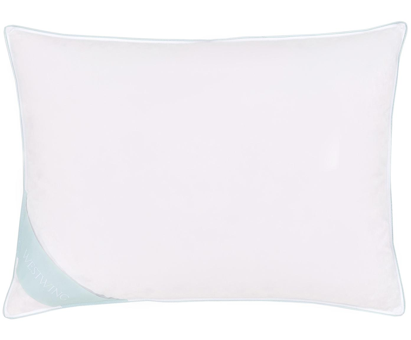 Almohada de plumas Comfort, dura, Funda: 100%algodón, sarga de Ma, Blanco con ribete turquesa satinado, An 50 cm x L 70 cm