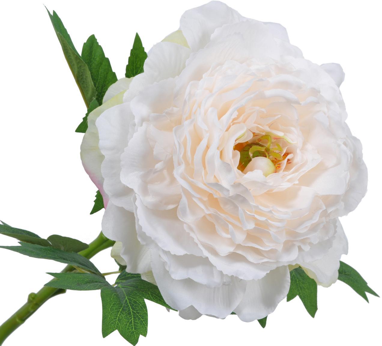 Flor artificial peonía Enia, Blanco crema, L 61 cm