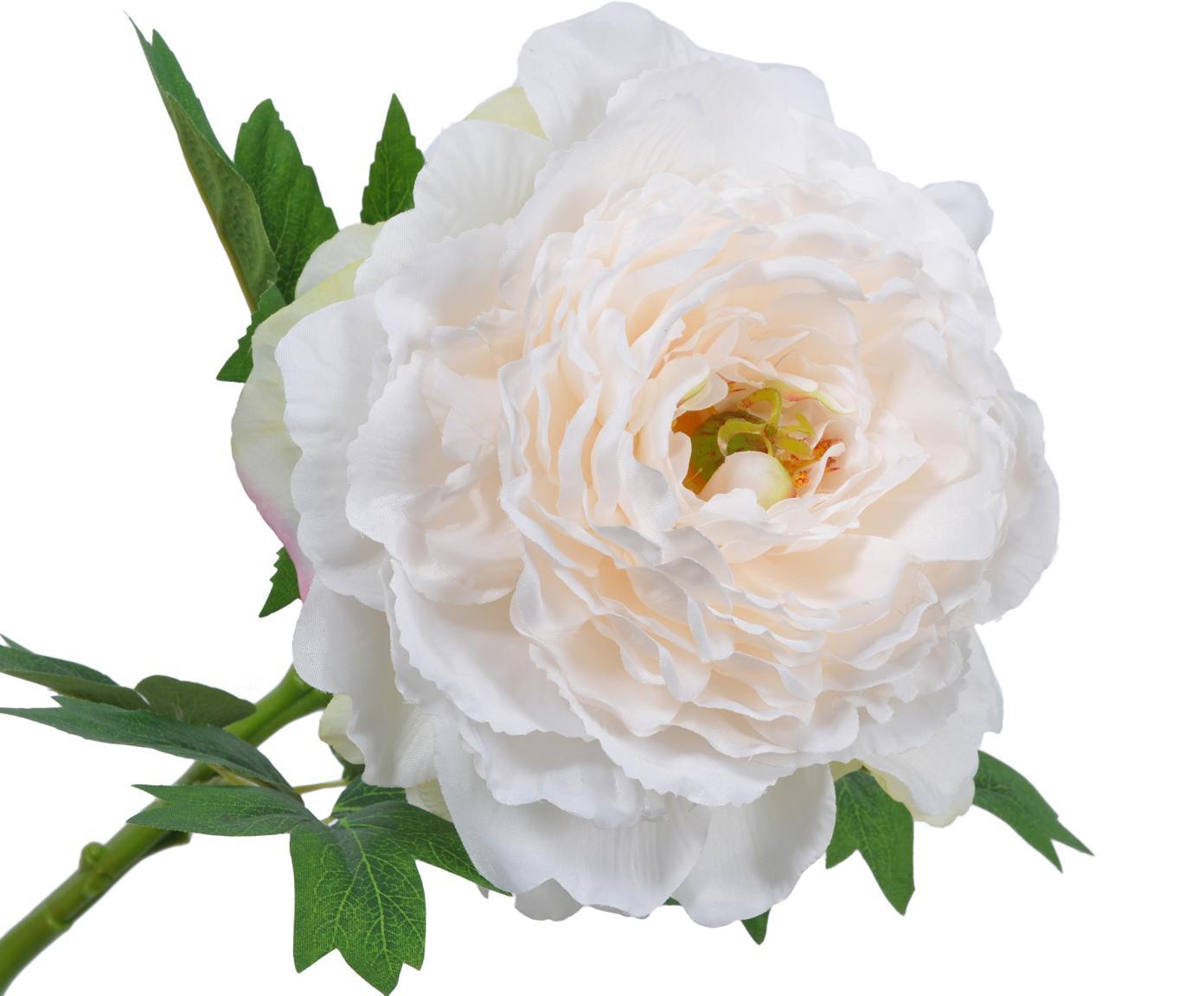 Sztuczny kwiat piwonii Enia, Kremowobiały, D 61 cm