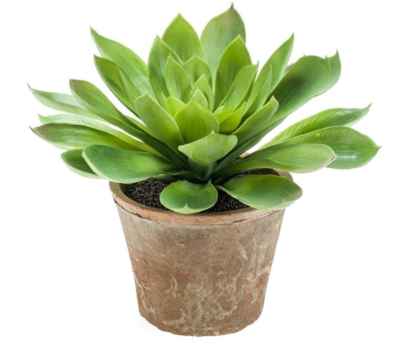 Planta artificial Suculenta, Verde, Ø 30 x Al 30 cm