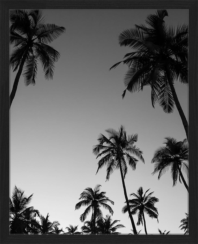 Gerahmter Digitaldruck Palm Trees Silhouette At The Sunset, Bild: Digitaldruck auf Papier, , Rahmen: Holz, lackiert, Front: Plexiglas, Schwarz, Weiß, 43 x 53 cm
