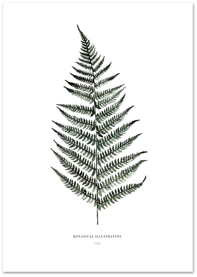 Poster Fern, Digitaldruck auf Papier, 200 g/m², Weiss, Grün, 21 x 30 cm