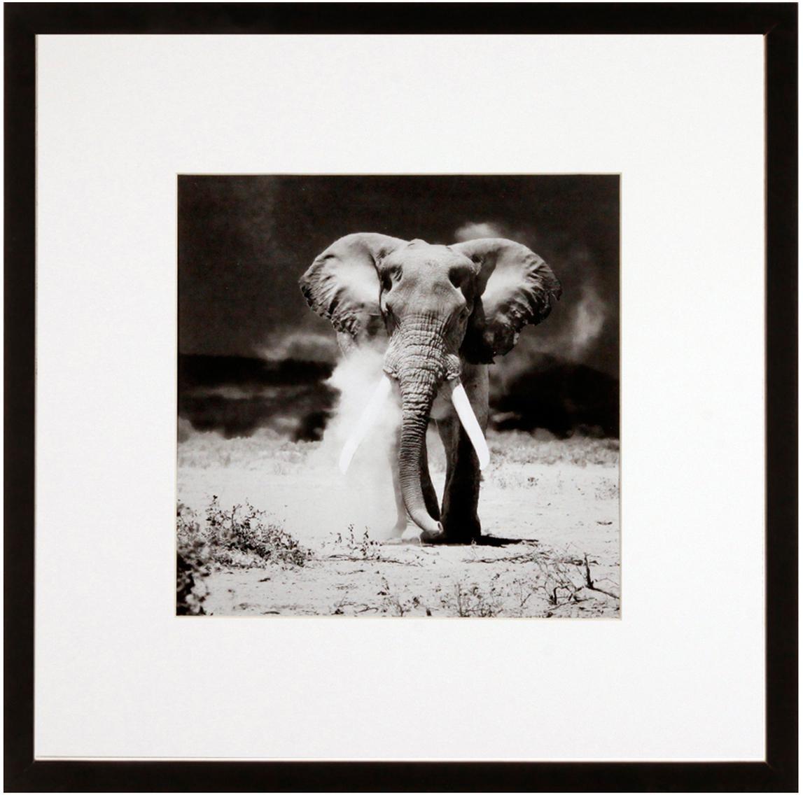 Oprawiony druk cyfrowy Elephant, Czarny, biały, S 40 x W 40 cm