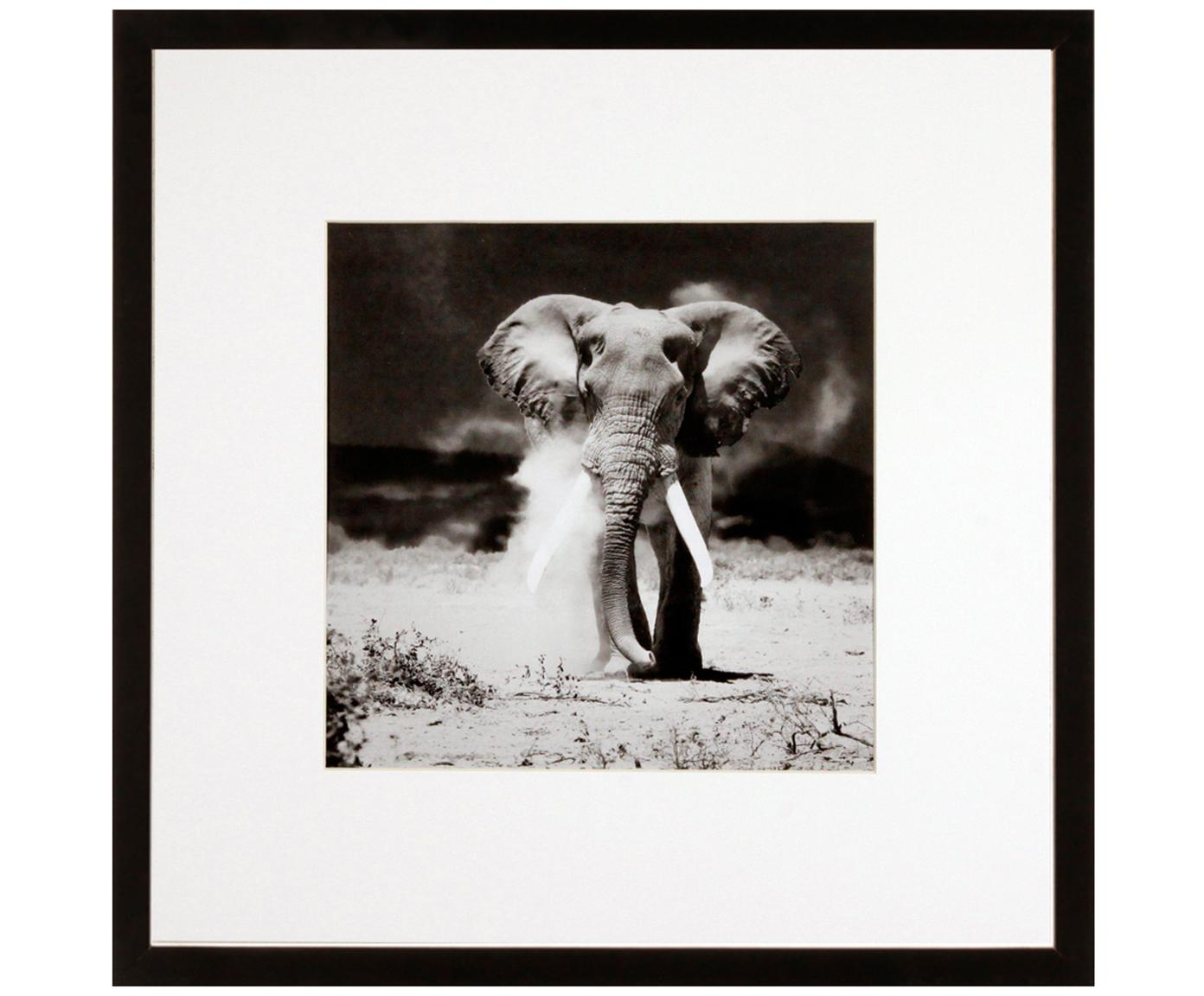 Stampa digitale incorniciata Elephant, Immagine: stampa digitale, Cornice: telaio in materiale sinte, Nero, bianco, L 40 x A 40 cm