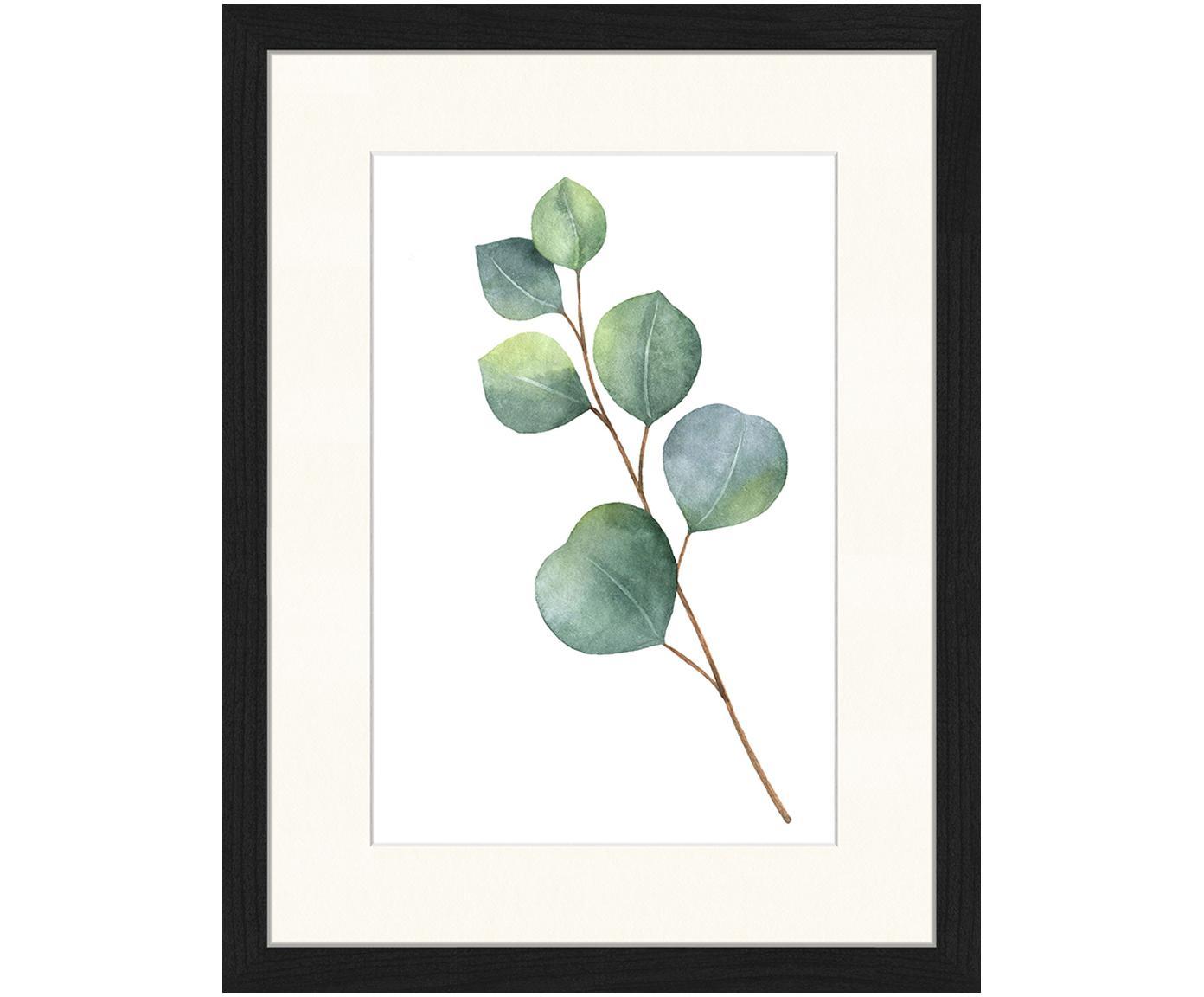 Ingelijste digitale print Eucalyptus II, Afbeelding: digitale print op papier,, Lijst: gelakt hout, Afbeelding: groen, wit. Lijst: zwart, 33 x 43 cm