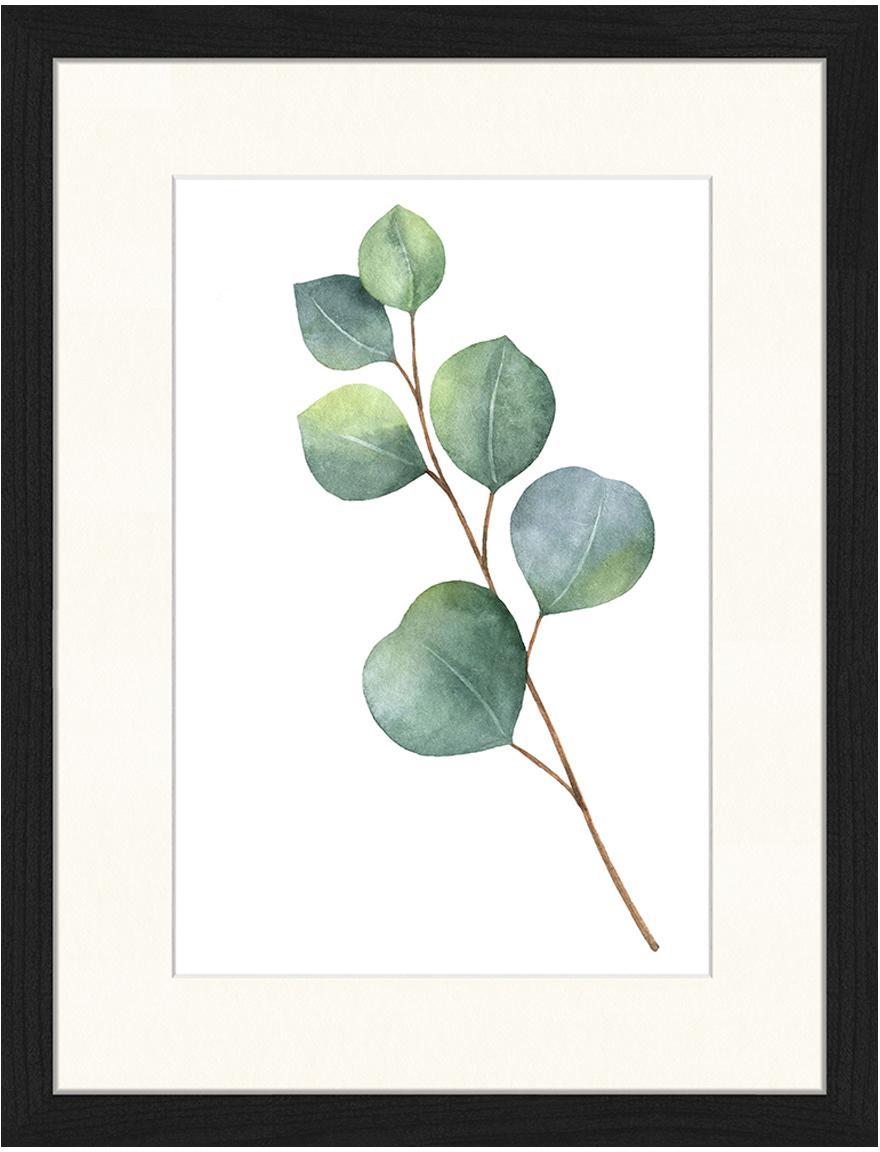Oprawiony druk cyfrowy Eucalyptus II, Ilustracja: zielony, biały Rama: czarny, S 33 x W 43 cm