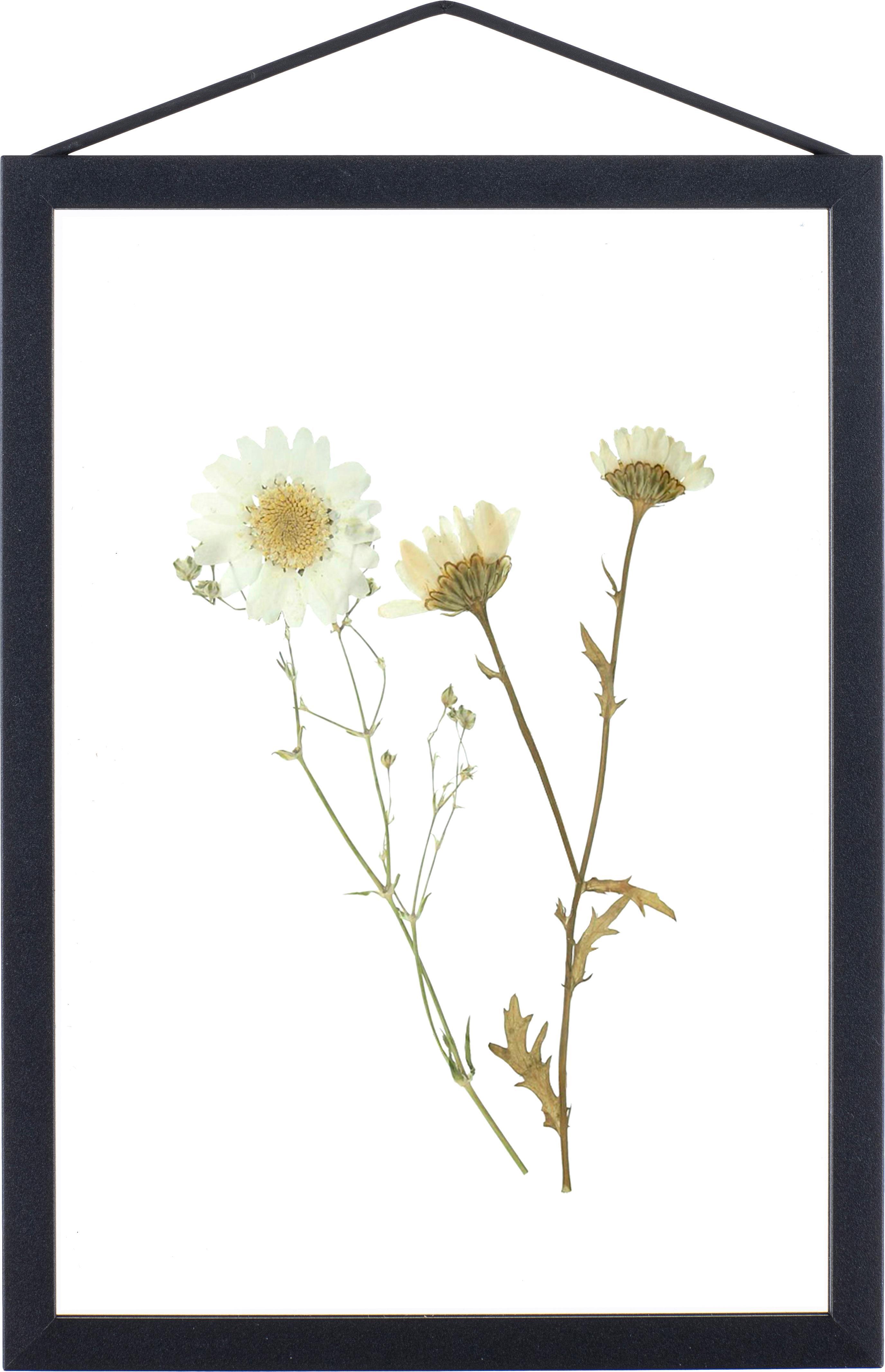 Fotolijst Frame, Frame: Aluminium, poedercoating, Frame: Zwart<br>Ophanging: Zwart<br>Voorkant en achterkant: Transparant, 17 x 23 cm