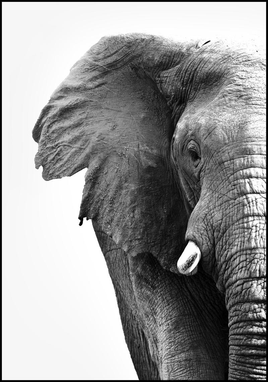 Stampa digitale incorniciata White Elephant, Immagine: stampa digitale su carta , Cornice: Pannello di fibra ad alta, Nero, bianco, Larg. 30 x Alt. 40 cm