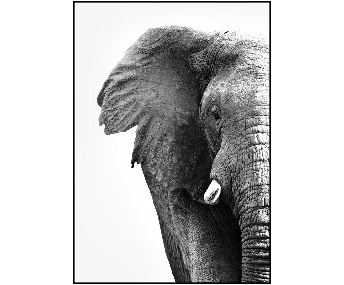 Impresión digital enmarcada White Elephant, Fotografía: impresión digital sobre p, Parte trasera: tablero de fibras de dens, Negro, blanco, An 30 x Al 40 cm