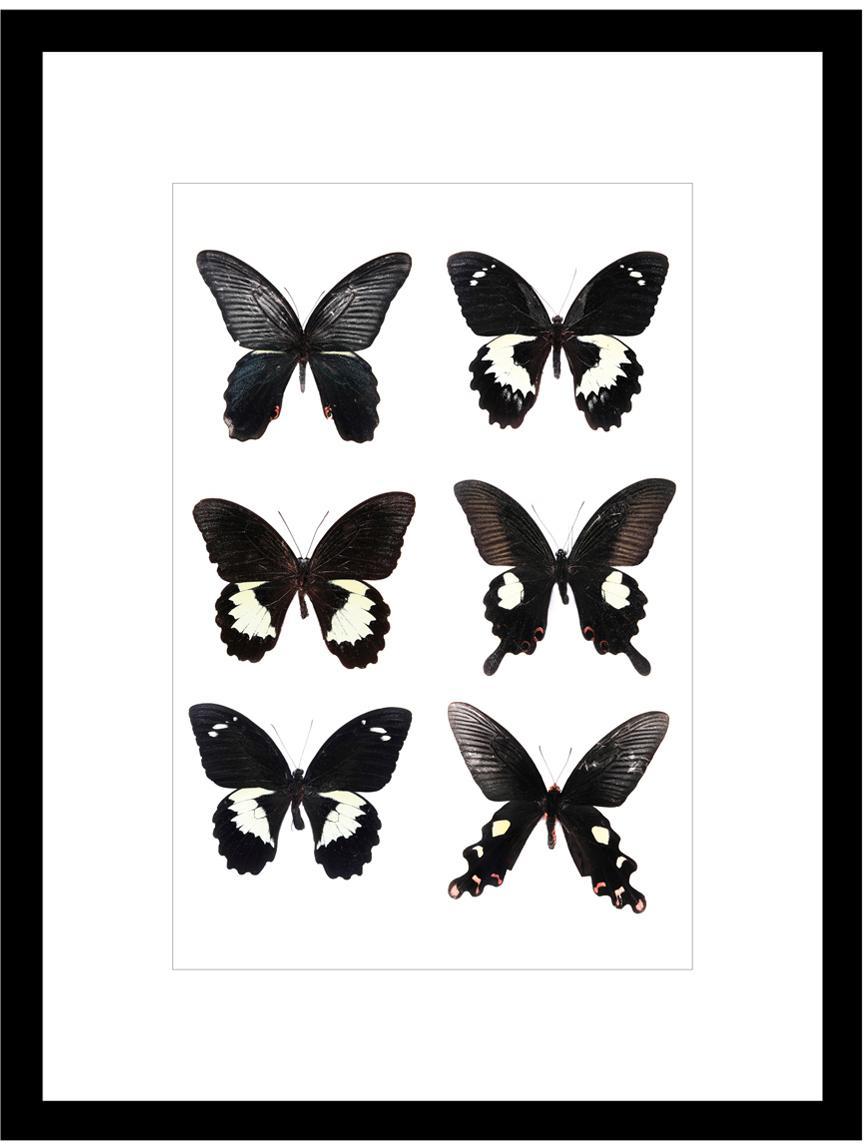 Ingelijste digitale print Butterflies Dark , Afbeelding: digitale afdruk, Frame: kunststof, Zwart, wit, 30 x 40 cm
