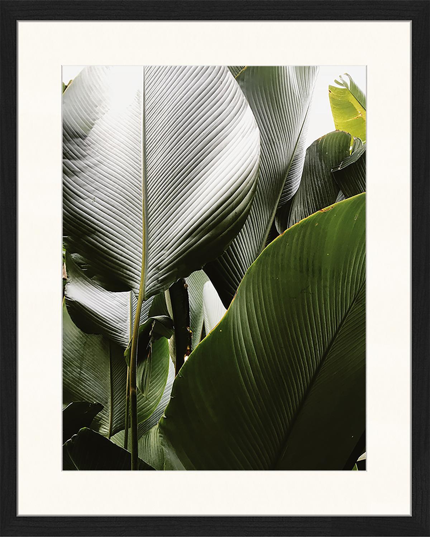 Oprawiony druk cyfrowy Palm Tree Leaves, Wielobarwny, S 43 x W 53 cm