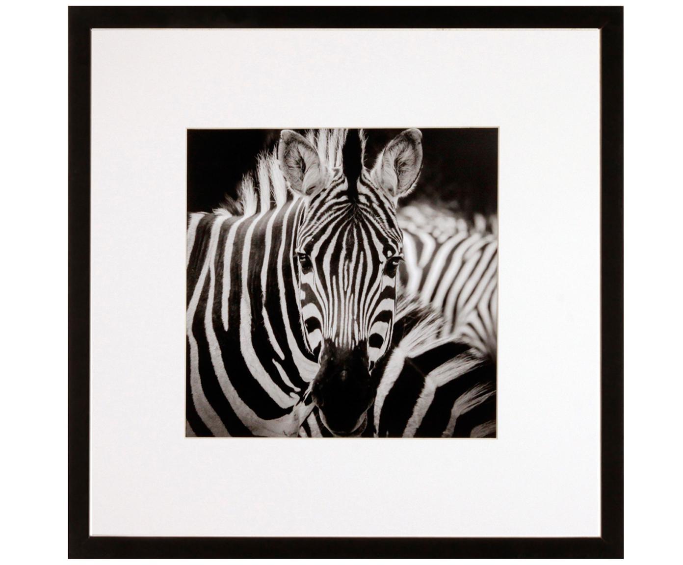 Ingelijste digitale print Zebra, Afbeelding: digitale print, Lijst: kunststof frame met glaze, Zwart, wit, 40 x 40 cm