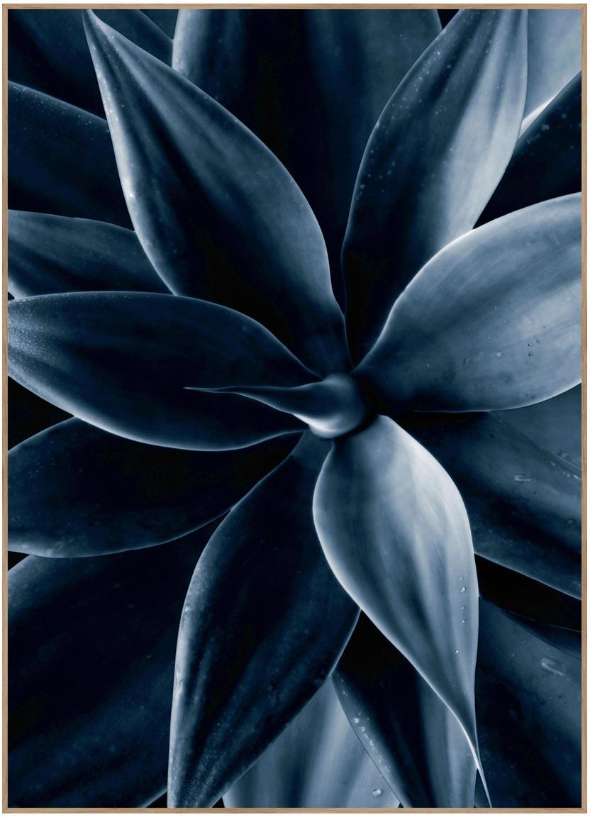 Ingelijste digitale print Dark Plant I, Afbeelding: digitale druk op papier (, Lijst: HDF, Zwart, blauw, 50 x 70 cm
