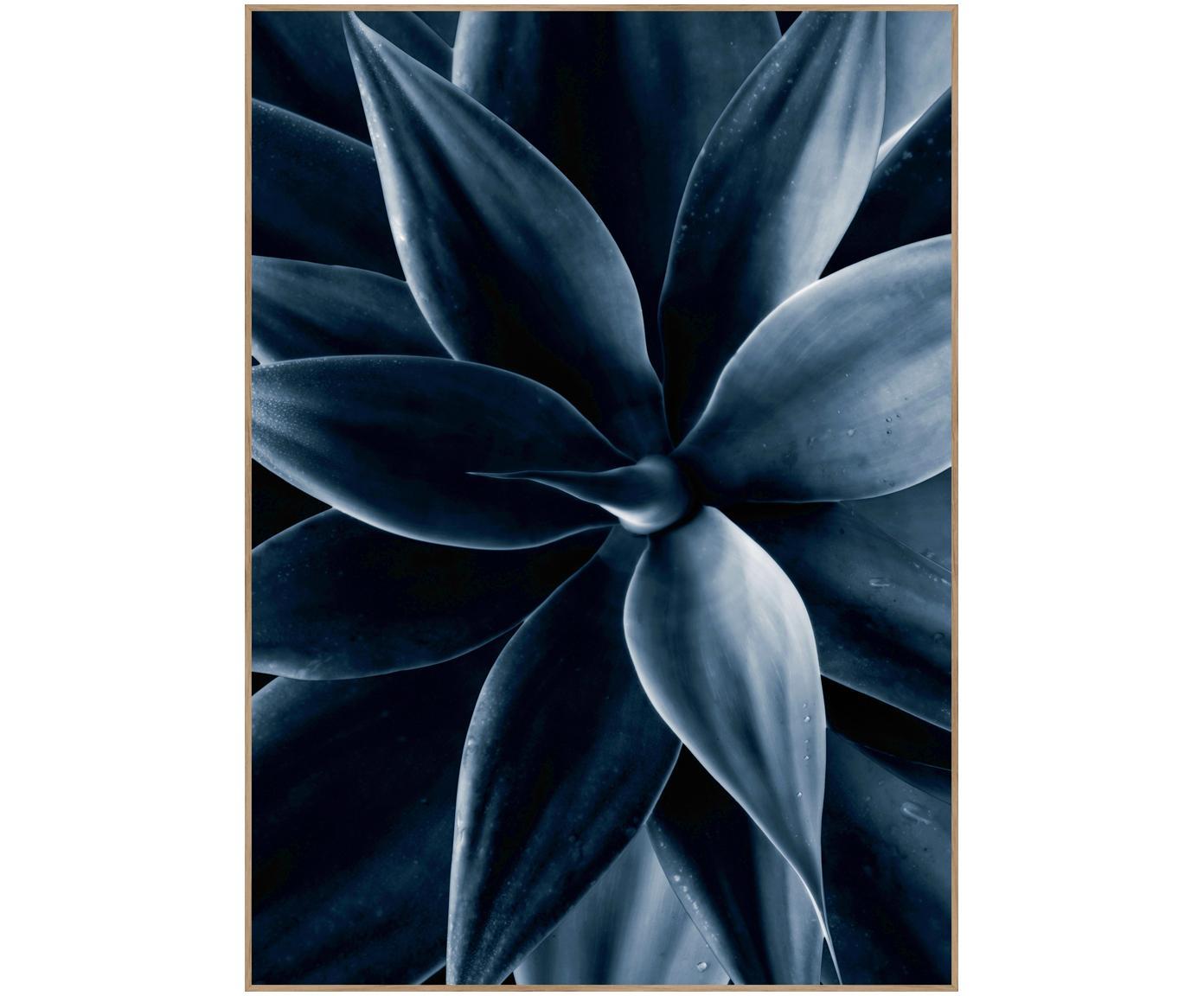 Gerahmter Digitaldruck Dark Plant I, Bild: Digitaldruck auf Papier (, Rahmen: Hochdichte Holzfaserplatt, Schwarz, Blau, 50 x 70 cm