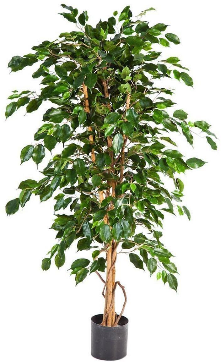 Planta artificial Ficus, Poliéster, troncos de materiales naturales, Verde, marrón, Ø 50 x Al 95 cm
