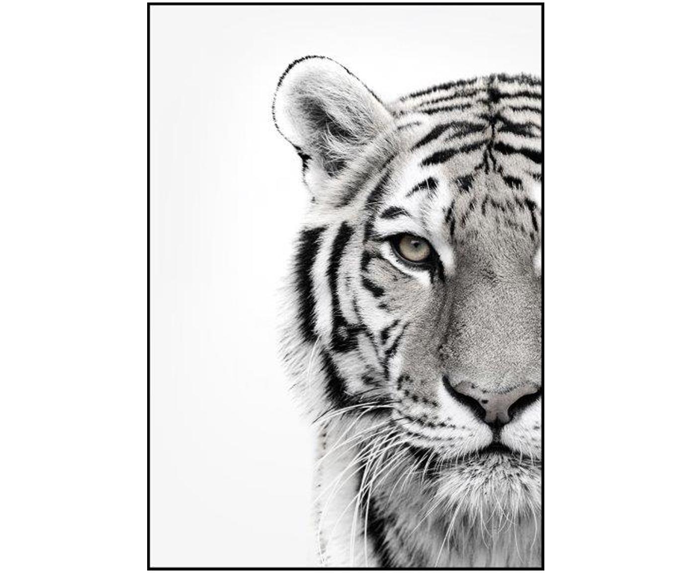 Gerahmter Digitaldruck White Tiger, Bild: Digitaldruck auf Papier (, Rahmen: Hochdichte Holzfaserplatt, Schwarz, Weiß, 50 x 70 cm