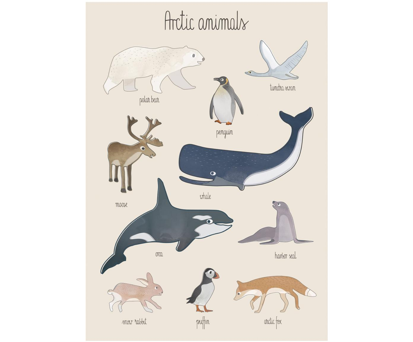 Poster Arctic Animals, Carta patinata, 250 g/m², Multicolore, Larg. 50 x Alt. 70 cm