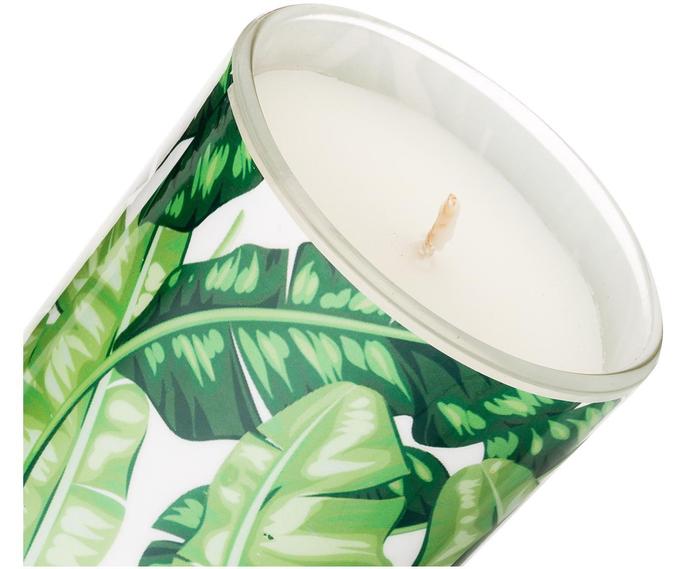 Vela perfumada Palm Passion (coco y lima), Recipiente: vidrio, Recipiente: tonos verdes Cera: blanco, Ø 8 x Al 10 cm