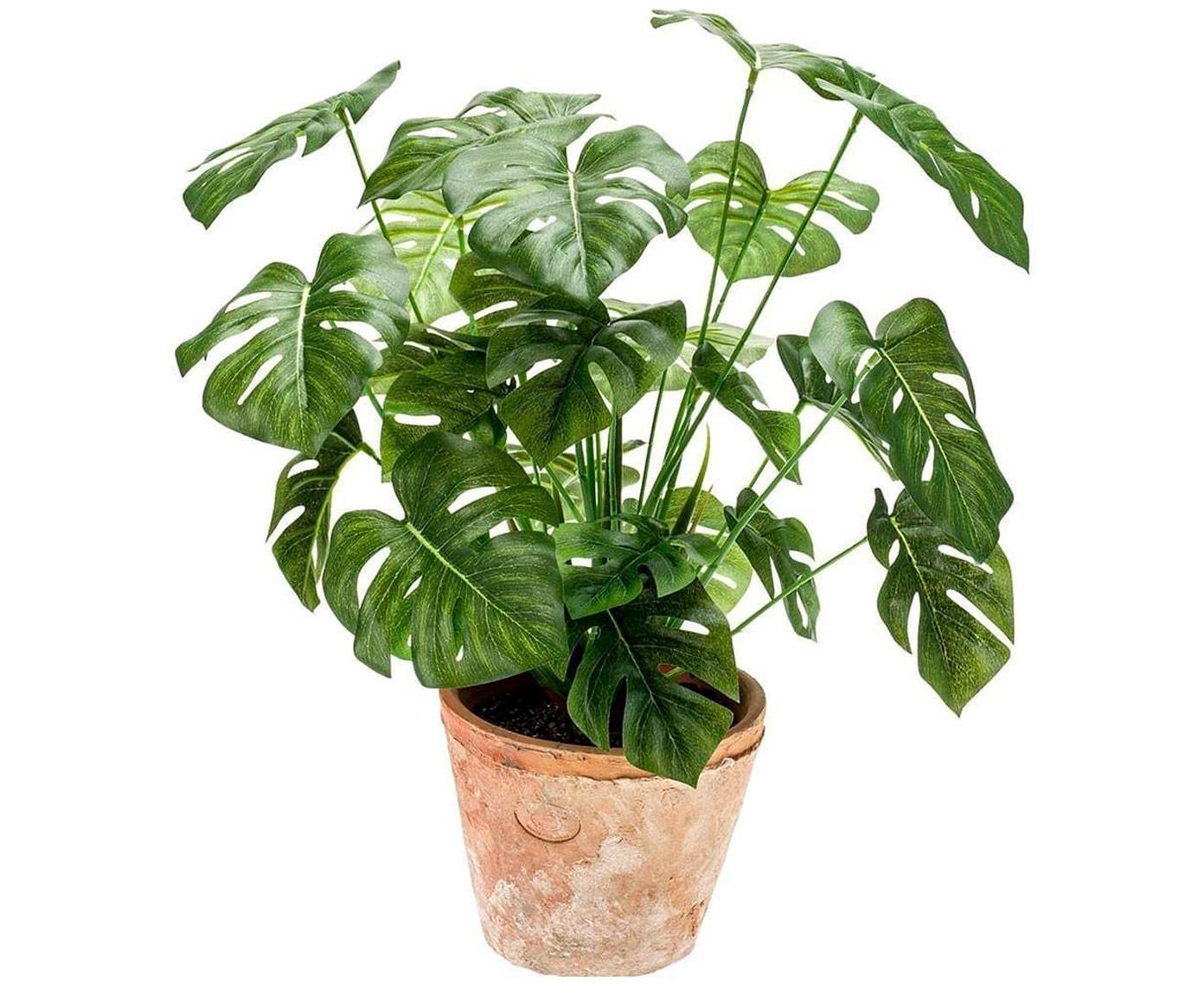 Planta artificial Monstera, Verde, Ø 16 x Al 70 cm