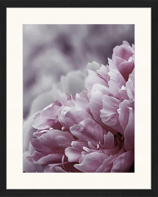 Stampa digitale incorniciata Pink Flower, Immagine: stampa digitale su carta,, Cornice: legno, verniciato, Multicolore, Larg. 43 x Alt. 53 cm