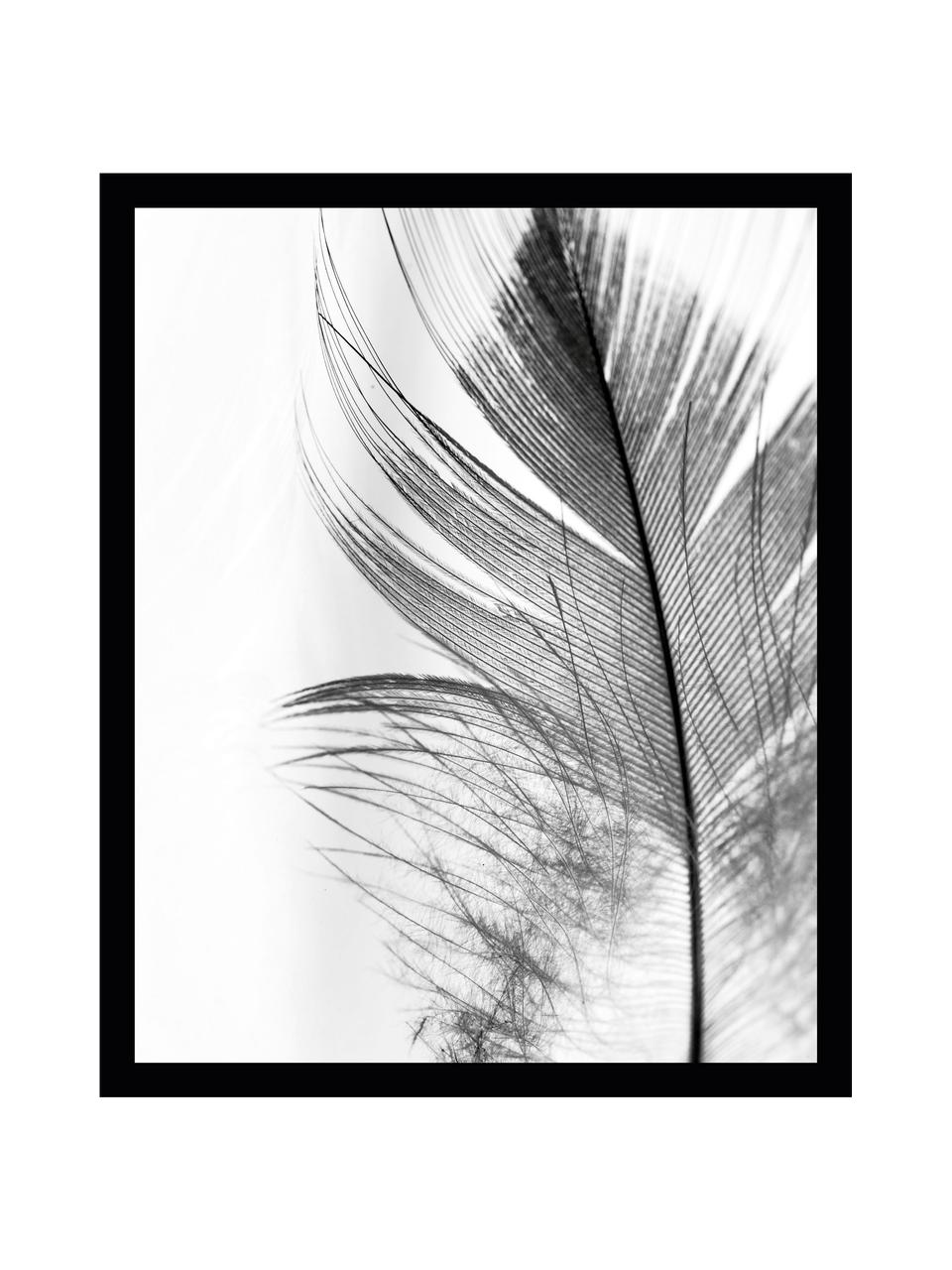Gerahmter Digitaldruck Feather, Bild: Digitaldruck auf Papier, Rahmen: Kunststoff (PU), Front: Glas, Rückseite: Mitteldichte Faserplatte , Bild: Schwarz, WeißRahmen: Schwarz, 30 x 40 cm