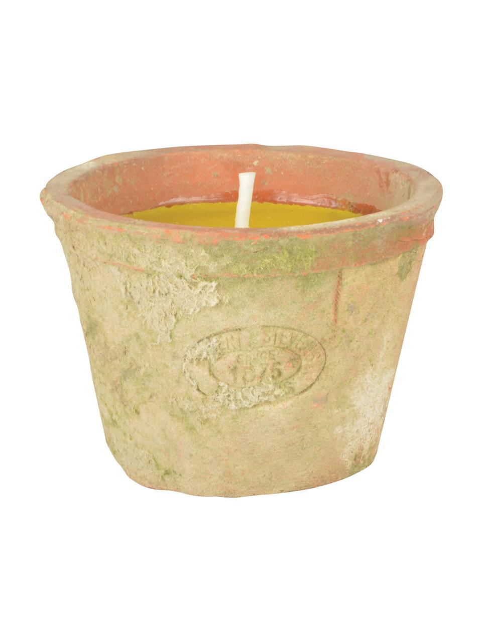 Candela antizanzare Alan, Contenitore: terracotta, Giallo, Ø 9 x Alt. 7 cm