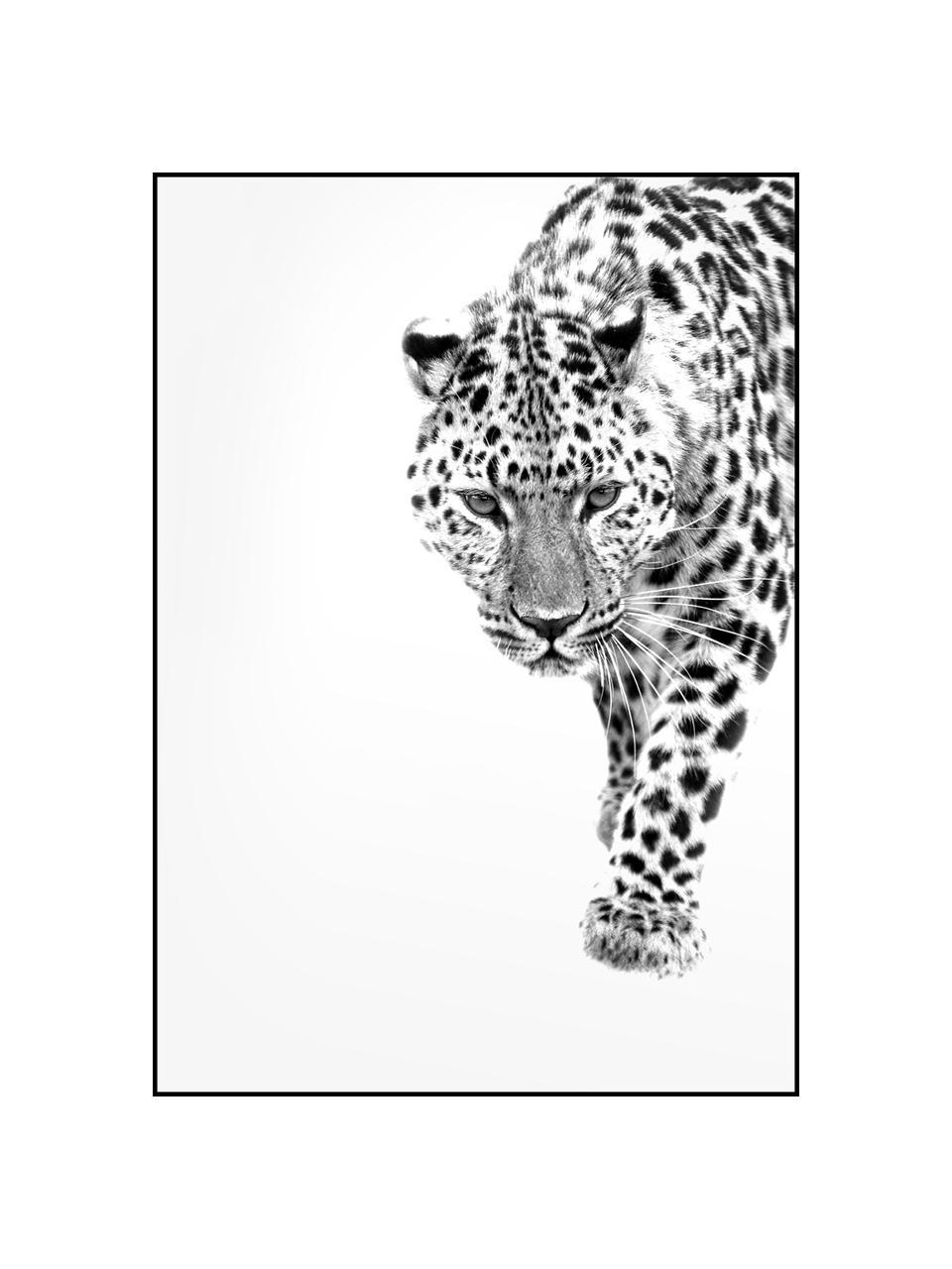 Oprawiony druk cyfrowy White Leopard, Czarny, biały, S 30 x W 40 cm