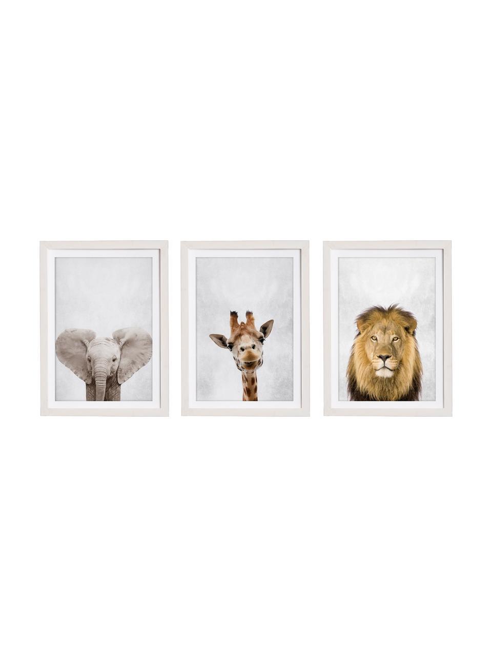 Set 3 stampe digitali incorniciata Wild Animals, Immagine: stampa digitale su carta, Cornice: legno verniciato, Multicolore, Larg. 35 x Alt. 45 cm