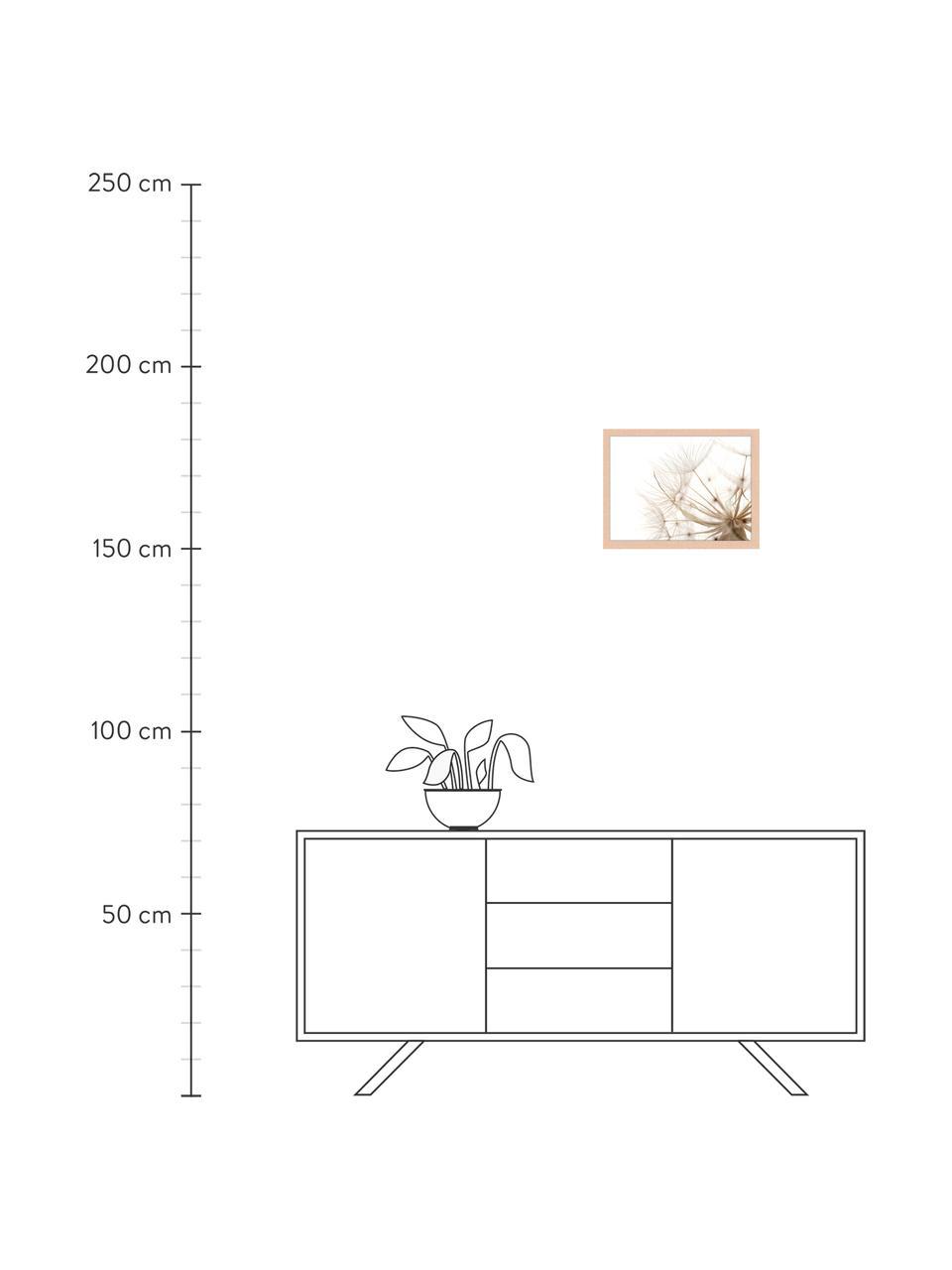 Stampa digitale incorniciata Flora Of Gran Canaria, Immagine: stampa digitale su carta,, Cornice: legno verniciato, Multicolore, Larg. 43 x Alt. 33 cm