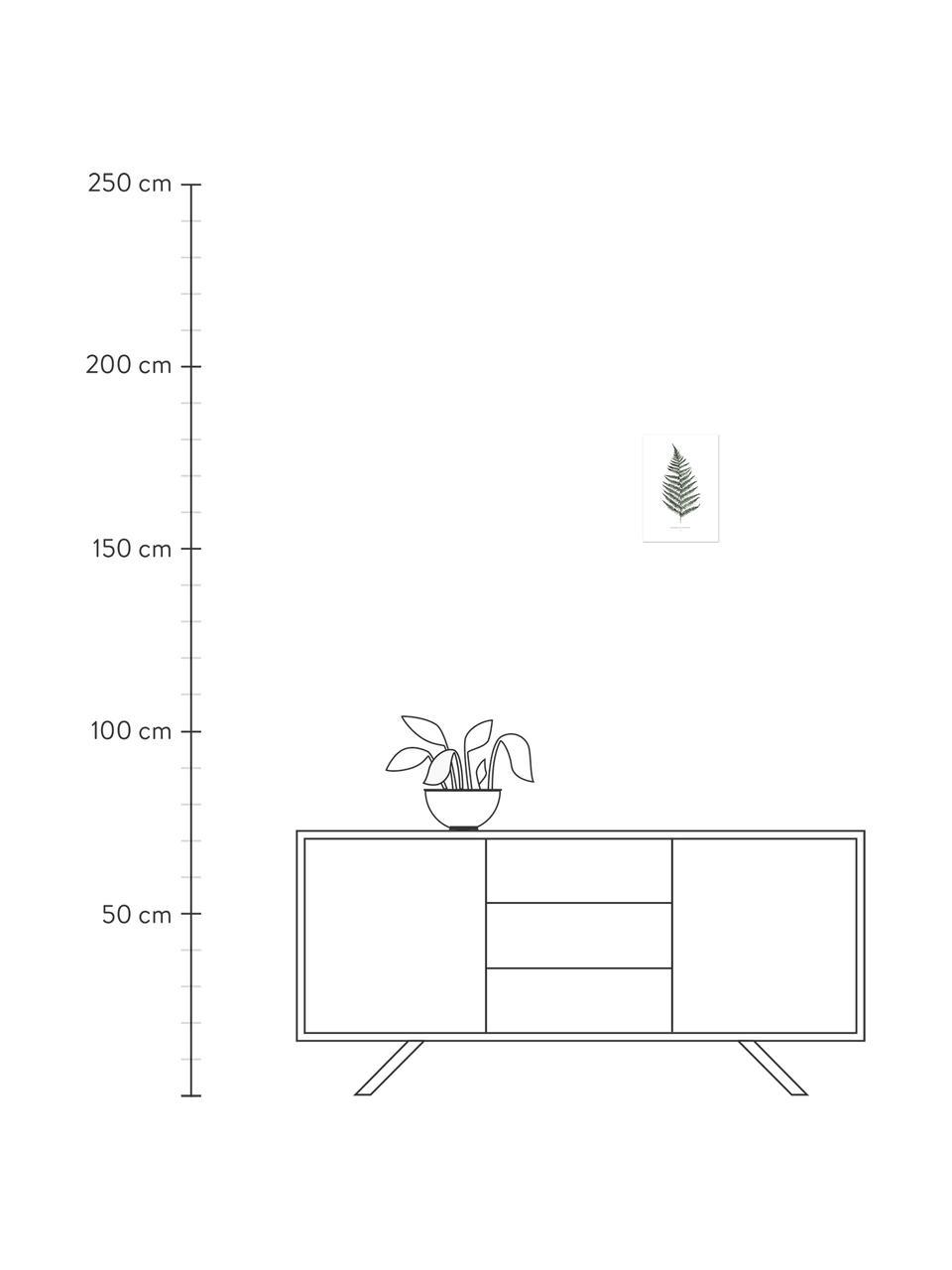 Poster Fern, Digitaldruck auf Papier, 200 g/m², Weiß, Grün, 21 x 30 cm