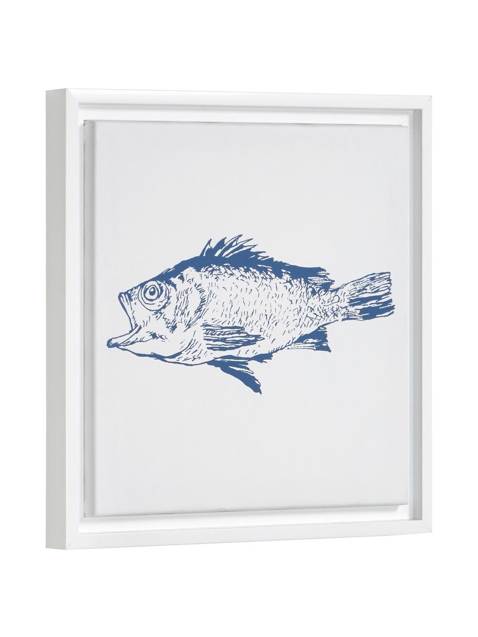 Gerahmter Digitaldruck Lavinia Fish, Rahmen: Mitteldichte Holzfaserpla, Bild: Leinwand, Weiss, Blau, 30 x 30 cm
