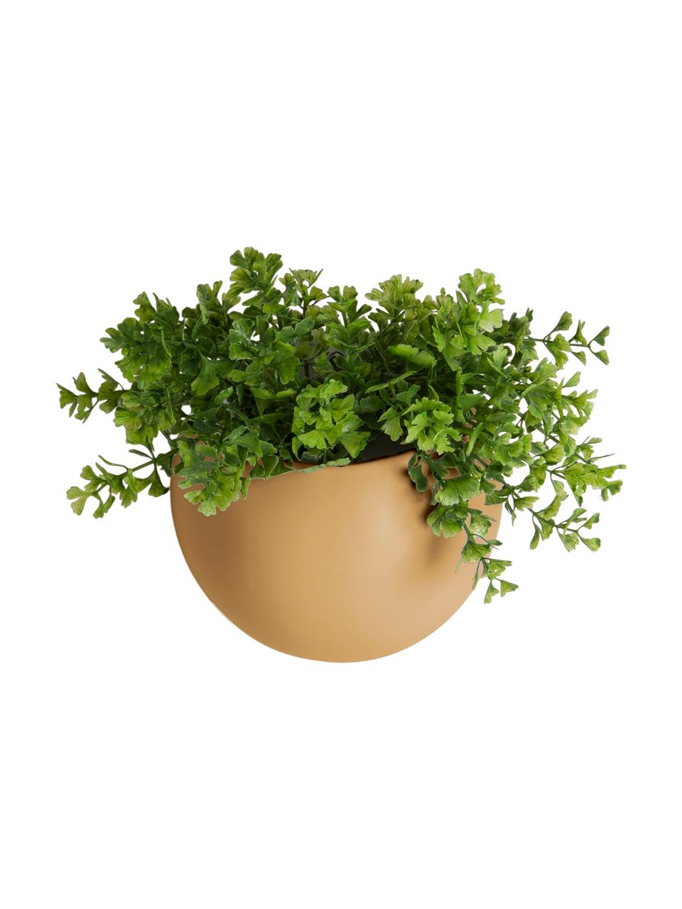 Kleine wandplantenpot Globe van keramiek, Keramiek, Geel, Ø 15 x H 10 cm