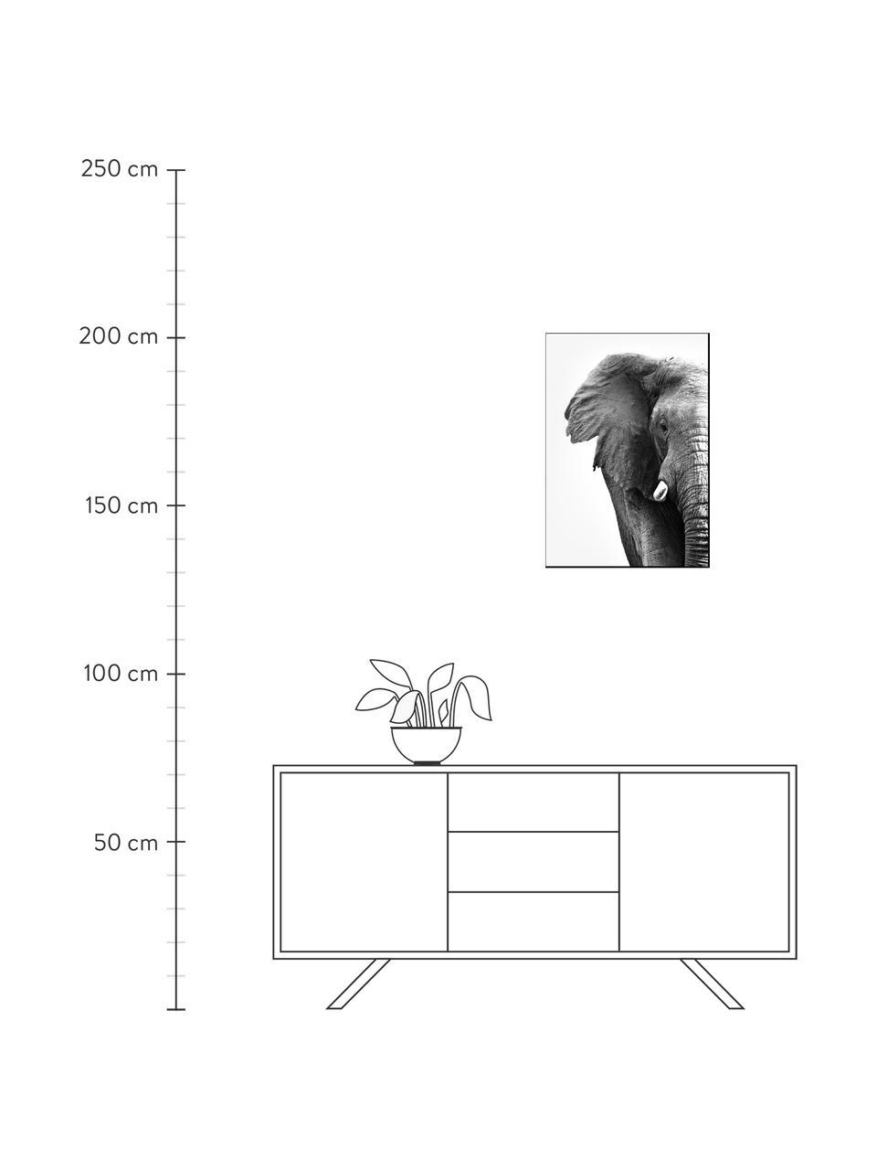 Zarámovaný digitální tisk White Elephant, Černá, bílá